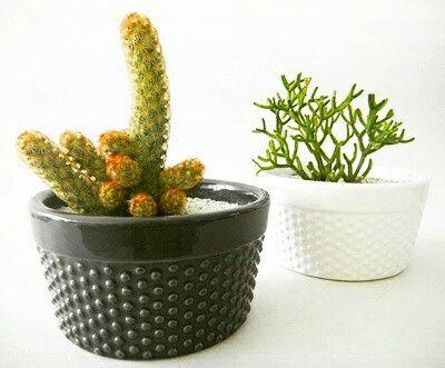 Cactus al mejor estilo nordic
