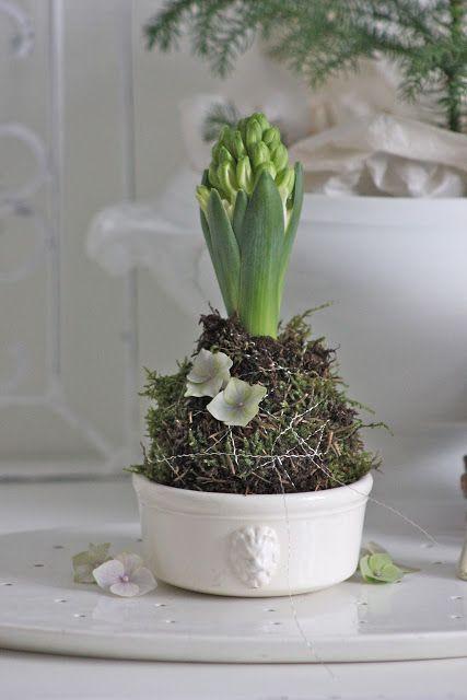 White Hyacinth - Inspiration Lane