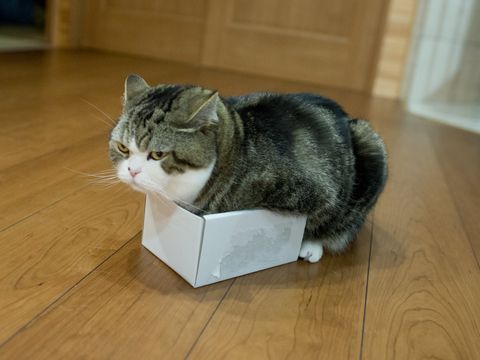 Really? Maru:[Please don't take a picture from the side!] 2-2 私信