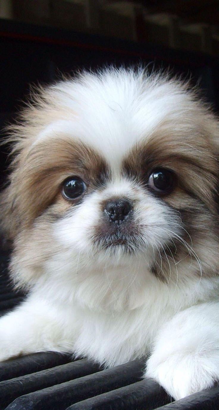 Puppy ^^