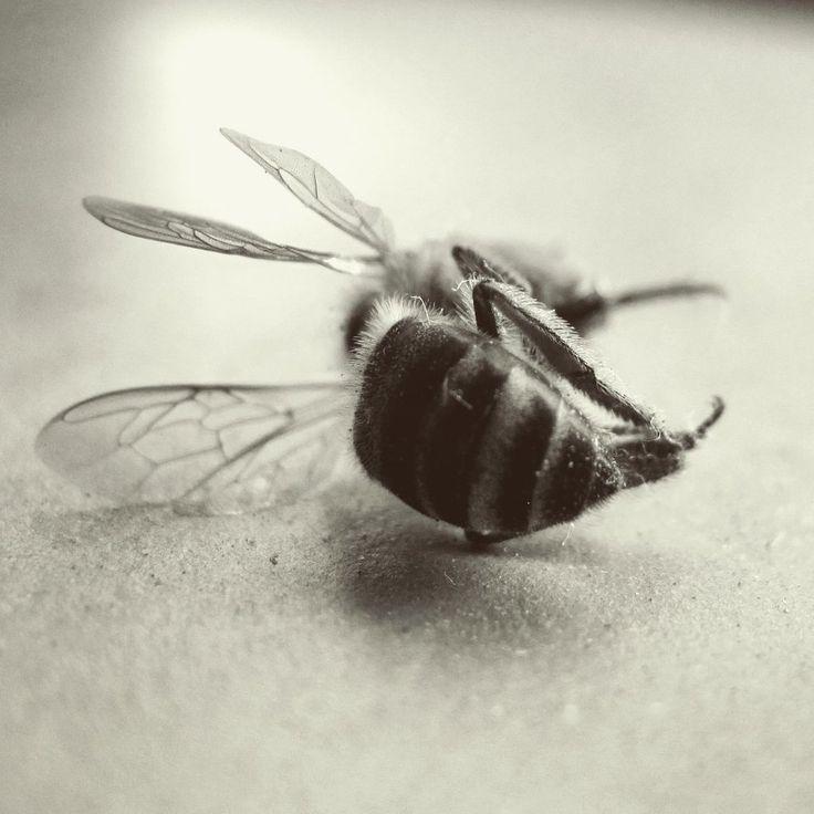 Deceased Bee by LillvA on DeviantArt