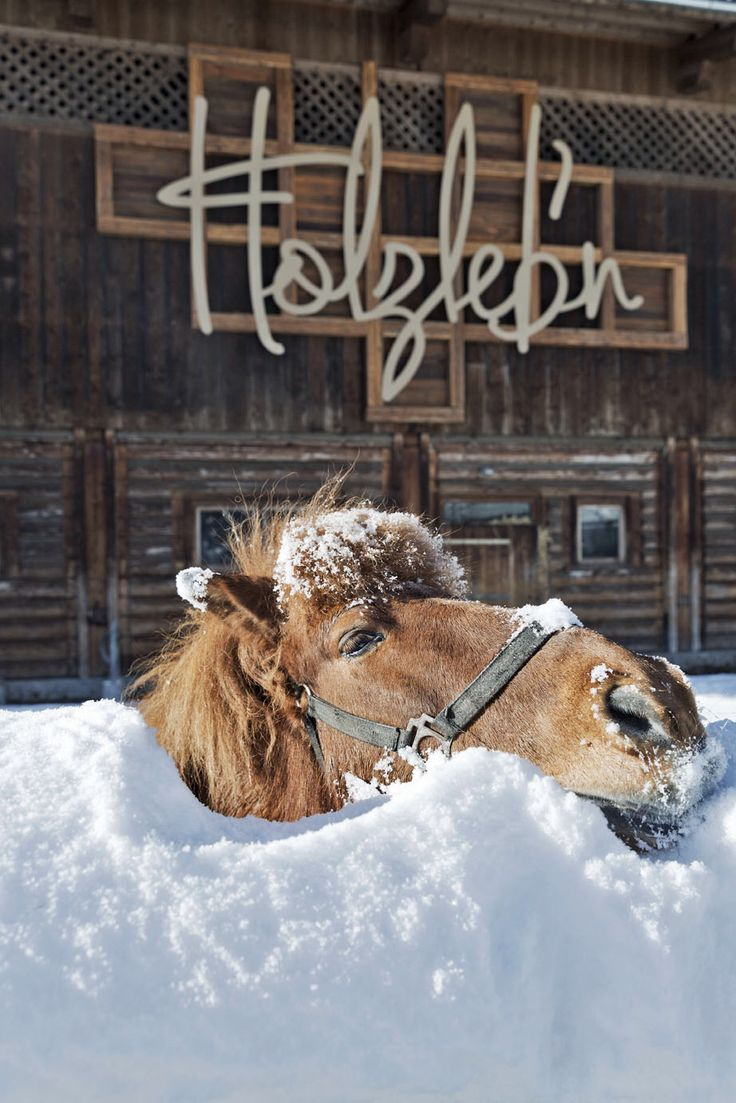 Unser Pony Fred - Our pony Fred