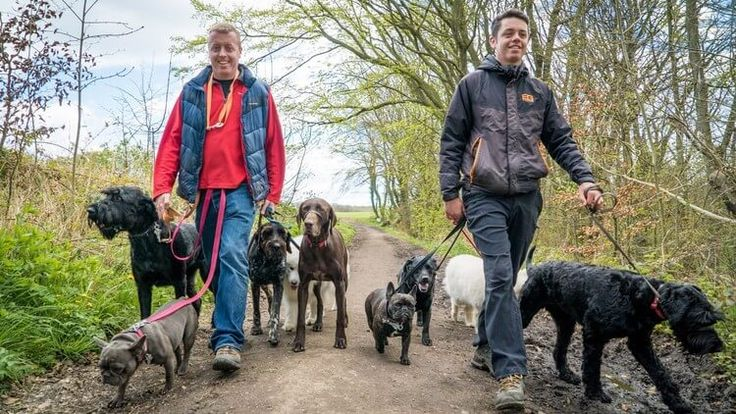 Dog Training For Humans – 'Worry Free Dog Walks' –How to enjoy more focus, more fun (and less stress) on your daily dog walks. Is walking your dog stressful andfrustrating? Do you love your dog dearly butwishhe listened to you when he is off lead? Do you feeljealous ...