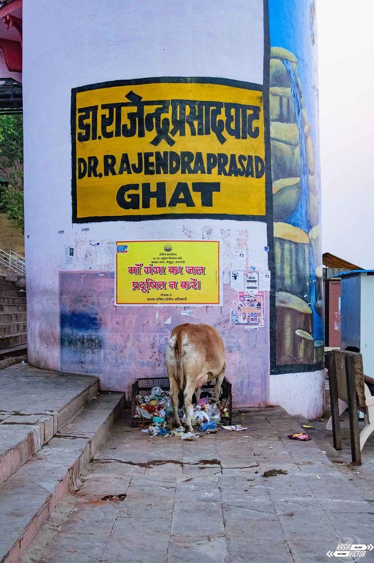 Magia Varanasi  Varanasi przyciąga jak magnes, zarówno hindusów, jak i turystów zagranicznych. Skąd bierze się ta magia? Z brązowych, wręcz gęstych od brudu wód Gangesu? Wszędzie obecnego smrodu? Wąskich uliczek, przez które trzeba się przemykać między pędzącymi skuterami, żebrakami, naciągaczami i pokaźnych rozmiarów krowami, uważając, żeby krowi placek nie wylądował na naszych nogach? Nie...