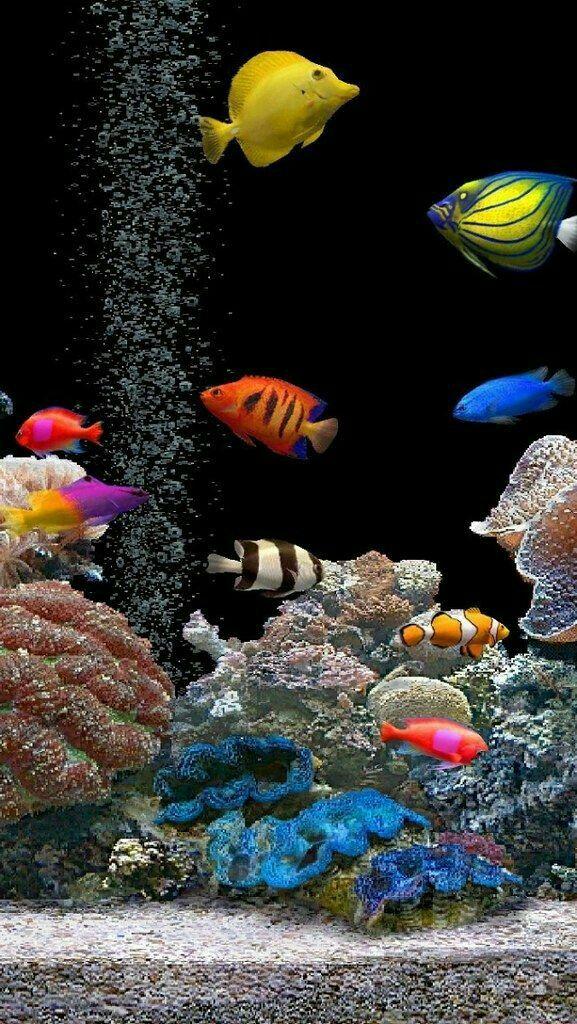 Jennifer   Live fish wallpaper, Aquarium live wallpaper ...