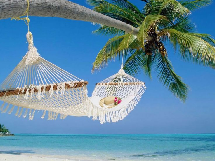 : Dreams, Hammocks, Palms Trees, Best Quality, Islands, Places, The Maldives, Heavens, The Beaches