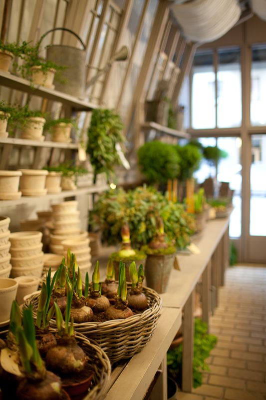 Garbo Interiors ~ greenhouse