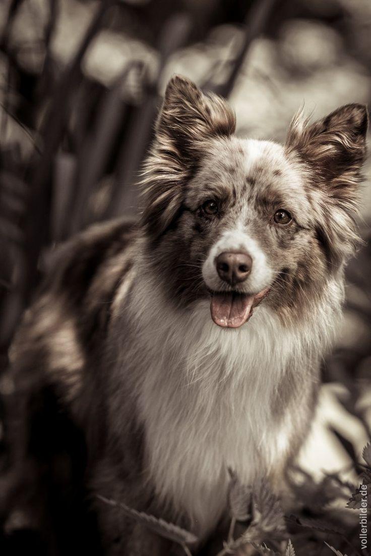 55 besten Hunde Bilder auf Pinterest | Basteln, Das beste und Hund ...