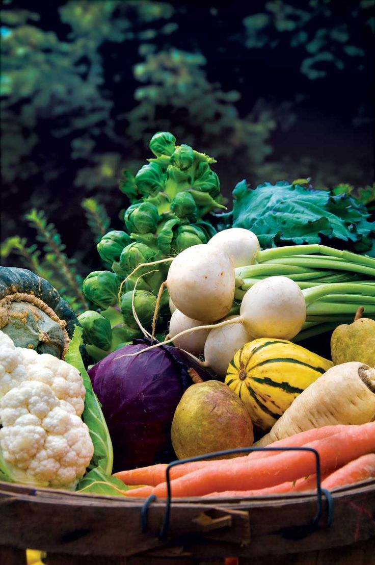 .: Earth News, Gardens, Vegetables Garden, Mother Earth, Fall Vegetable, Garden Vegetables, Veggie, Fall Gardening, Vegetable Garden