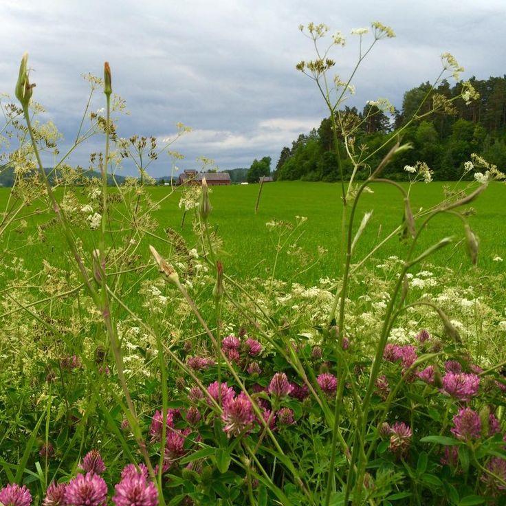 Summer flowers in Porvoo Finland