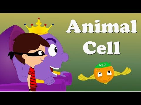 3D Plant Cell by Max and Sam - YouTube