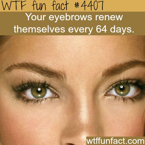 Eyebrows facts - WTF fun facts