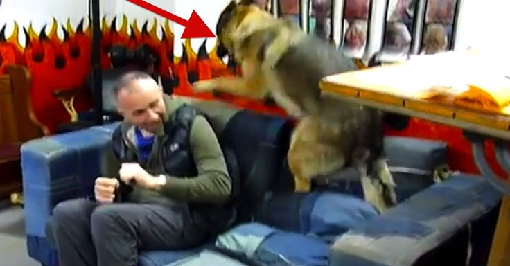 'Vicious' Dog Attacks Owner The Second He Homes From Work! This Is CRAZY! via LittleThings.com