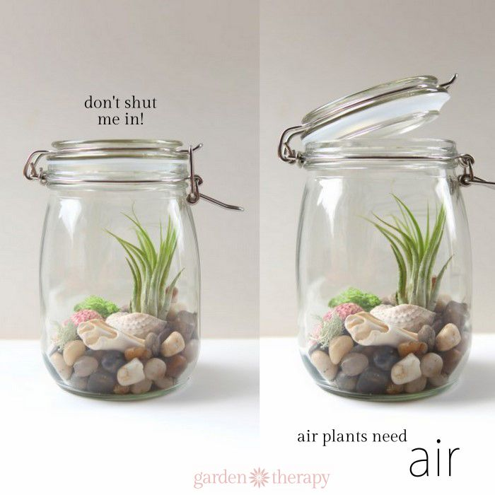don't shut me in! Air plants need air. Great tips for keeping air plants ALIVE and thriving! Air, water, and light is all they need.