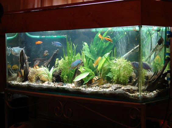 Make your fish tank look professionally designed cool for Cool fish tank