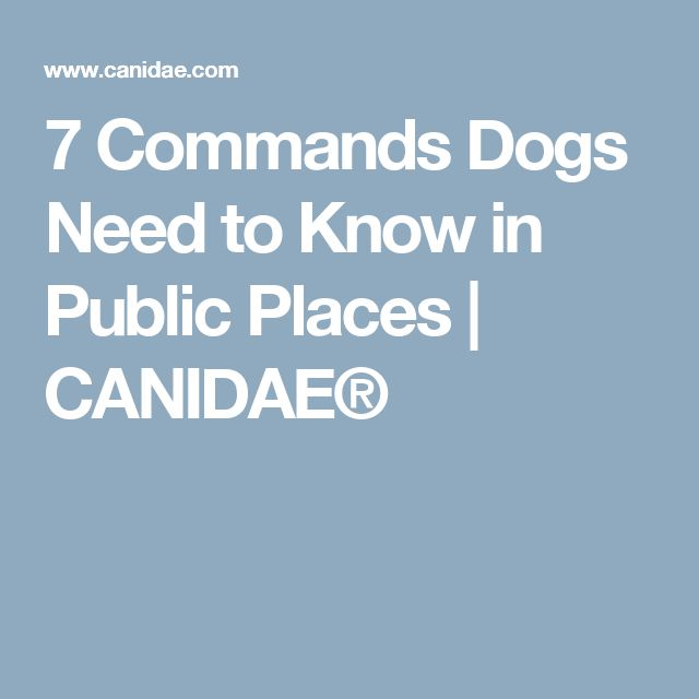 7 Commands Dogs Need to Know in Public Places | CANIDAE®