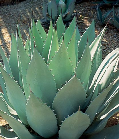 arizona desert landscaping plants landscaping in peoria arizona