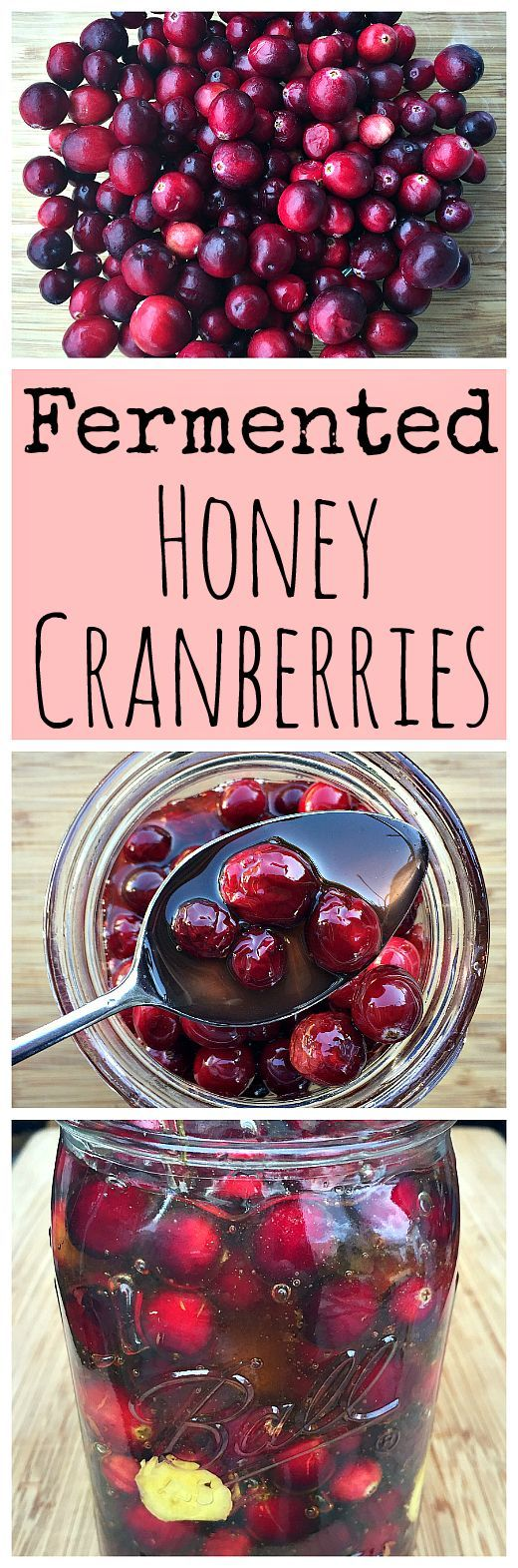 Ferment some cranberries in honey for a tasty holiday treat!