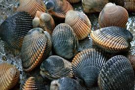 Image result for stiffkey blue shell