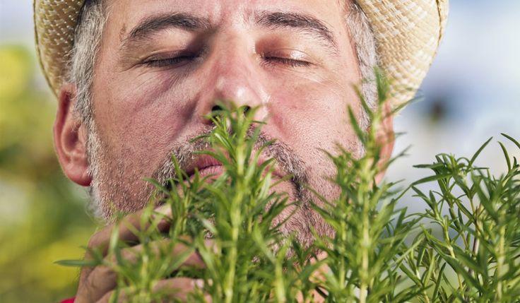När minnet sviker, lukta på rosmarin. Forskare vid Northumbria University har upptäckt att friska vuxna minns bättre om rummet fylls med doften av rosmarin.