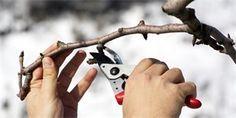 Řez ovocných stromů – kdy, které a jak