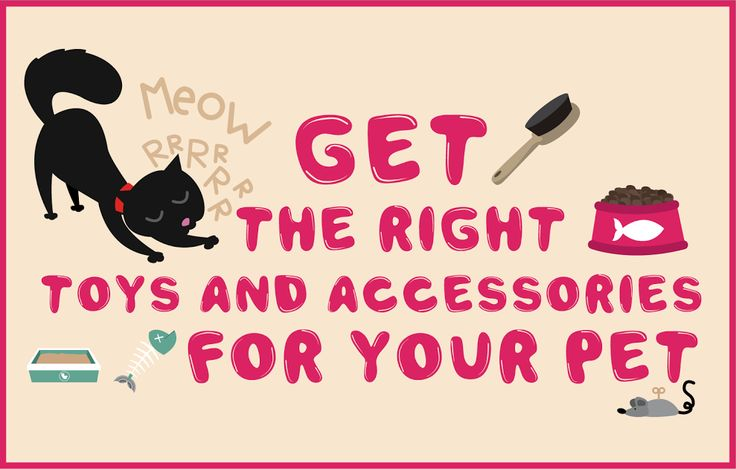 Get the right #Toys and #Accessories for your #Pet #Pets #Animals #PetCare