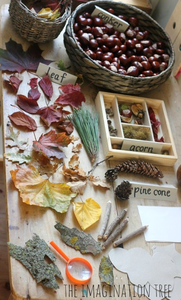 Because of the abundance of leaves, conkers, acorns and seeds that they have been finding outside over the past few weeks, we decided to start a new nature table, this time for looking at all our Autumnal treasures.
