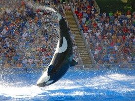 Orlando - SeaWorld Orlando