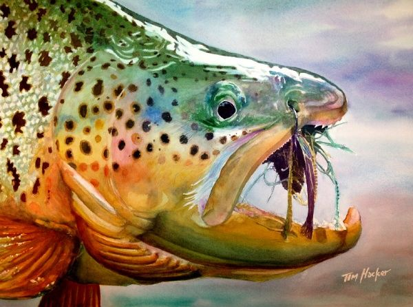 20 best brook trout fish paintings images on pinterest for Best trout fishing in new hampshire