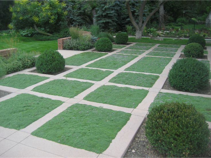 interupted grid with elfin thyme walkable groundcover garden design stonegate gardens denver co
