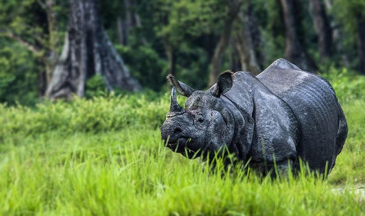 The rhinos of Bengal will soon get two new homes in the two national parks of north Bengal. #WildLife