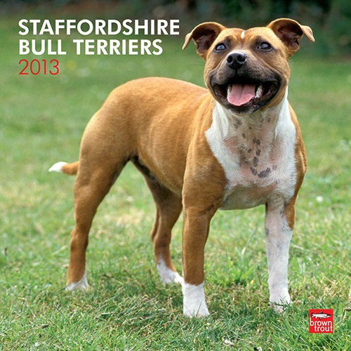 Staffordshire Bull Terriers Wall Calendar: Originally a cross between various terriers and bulldogs, Staffordshire Bull Terriers are muscular dogs with great strength and agility. Bright, trusting, and affectionate, they are especially fond of children.  $14.99  http://calendars.com/Staffordshire-Bull-Terriers/Staffordshire-Bull-Terriers-2013-Wall-Calendar/prod201300004638/?categoryId=cat10119=cat10119#