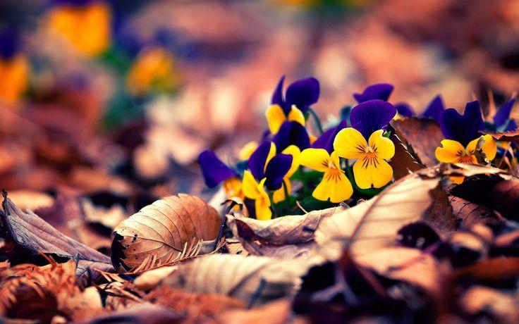 Осень – это вторая весна, когда каждый лист – цветок...