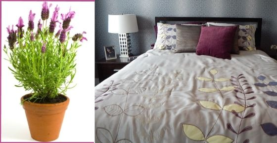 Do you want to sleep better? Here are 10 plants for your bedroom that will help you sleep better and detoxify the air