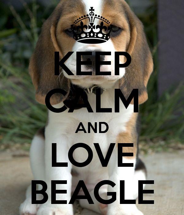 Keep Calm and Love Beagle