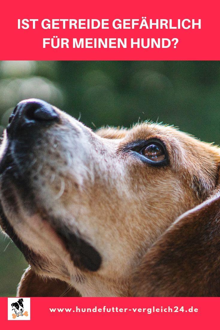 Ja Hrlich Leiden Mehr Hunde An Einer Sogenannten Getreide Allergie Wodurch Sich Das Fa Ttern Von Getreide In 2020 Hunde Futter Hundefutter Getreidefreies Hundefutter