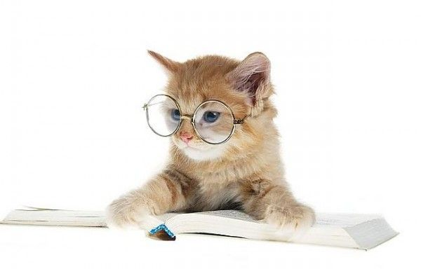 We don't have cats reading books (we wish!), but we do have books about cats.: Kitty Cat, Reading Book