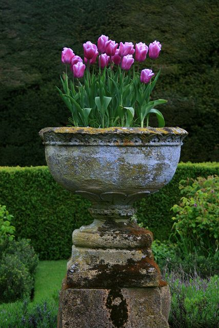 container gardening, landscaping, landscape design, purple flowers, tulips, garden design