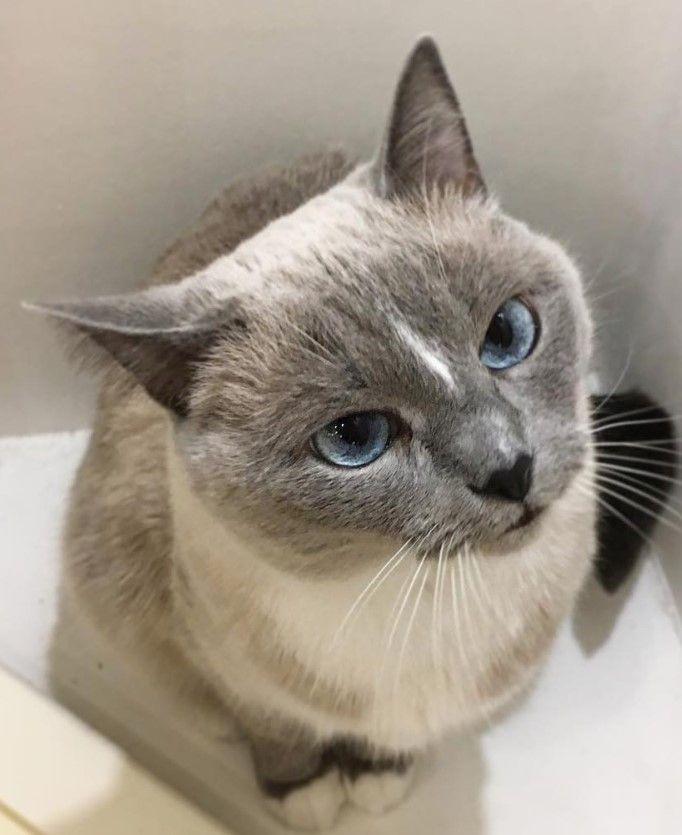 150 Majestic Female Cat Names | Cats | Cats, Cat names, Cat lady