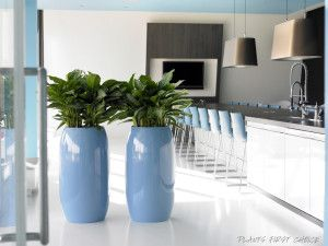 Foliage Indoor Plant Hire is experienced plants Hire Company in Melbourne and surrounding areas. We offer you the best indoor plant hire services at affordable cost.