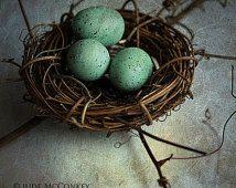 nido de huevos de los petirrojos aún decoración vida fotografía madres decoración para el hogar guardería Primavera