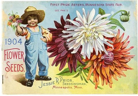 This young lad is beaming about the 1st prize winning asters he has in his hands from the front cover of Jessie Prior's 1904 seed catalog.