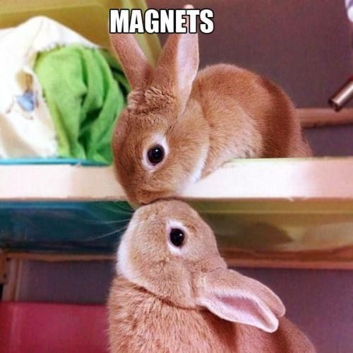 : Bunnies Kiss, Kiss Me, A Kiss, Love You, Baby Bunnies, Cute Bunnies, So Sweet, Adorable Animal, Kiss Bunnies