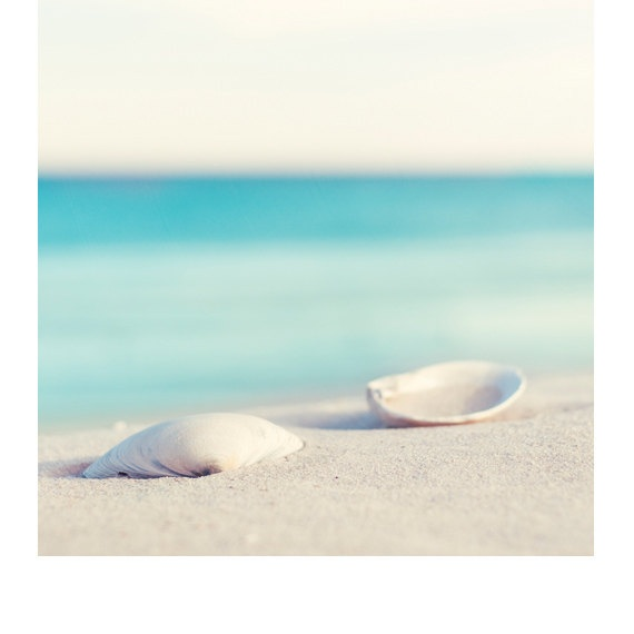 Fine Art Photography  sea shell photography by CarolynCochrane, $15.00