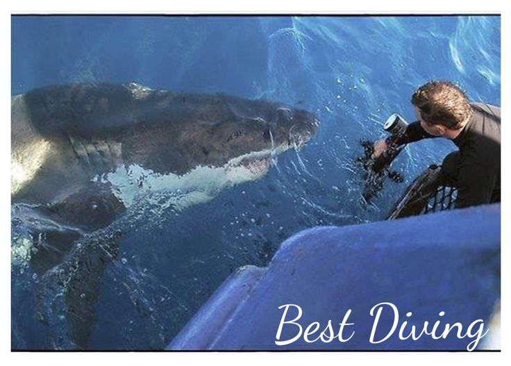 #scuba #diving #greatwhite #bestdiving