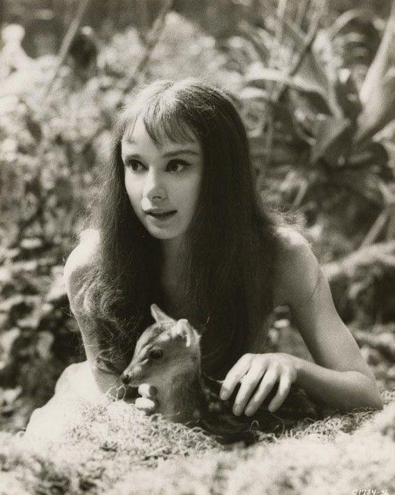 audrey hepburn pet deer | Audrey Hepburn with her pet deer, photographed on the set of Green ...