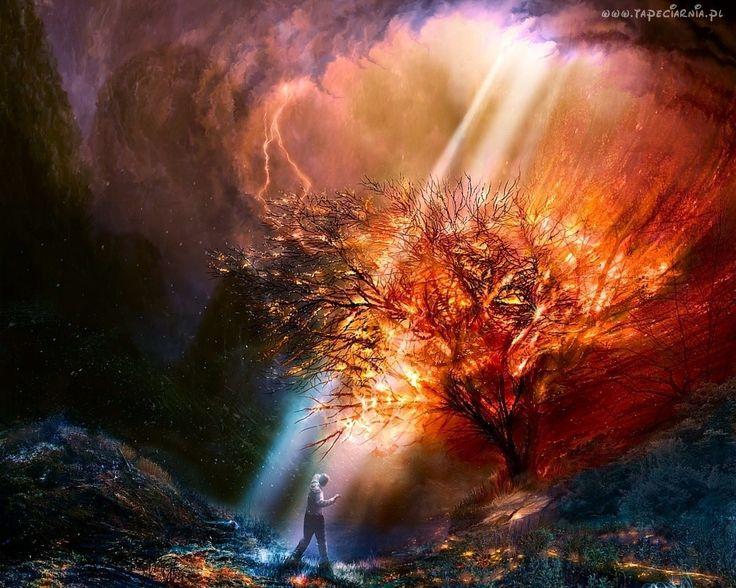 Burza, Płonące, Drzewo, Mężczyzna