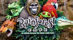 Rainforest Cafe coupon: Up to $30 off $100 #LavaHot http://www.lavahotdeals.com/us/cheap/rainforest-cafe-coupon-30-100/163000?utm_source=pinterest&utm_medium=rss&utm_campaign=at_lavahotdealsus