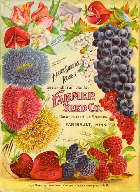 Farmers' wives might have gazed wistfully over the back cover of the 1906 Farmer Seed & Nursery catalog.  The brightly colored images of flowers, berries, and grapes might have fostered dreams of jams, jellies, and lovely gardens and bouquets to come.  Farmer Seed & Nursery originated in Faribault, MN in 1888. Andersen Horticultural Library hosts a collection of vintage Farmer Seed & Nursery catalogs.