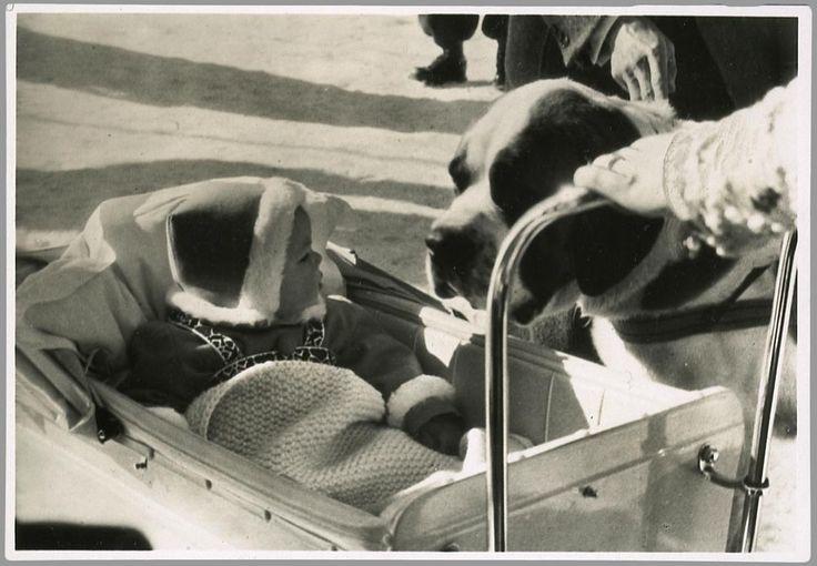 1939 Beatrix op winter vakantie hier kijkt ze naar de Sint Bernard hond die haar kinderwagen-slee gaat trekken.